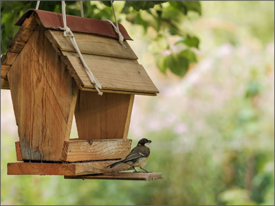 Four Ways to Attract More Wildlife to Your Backyard